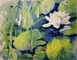 Water Lily I (sold)